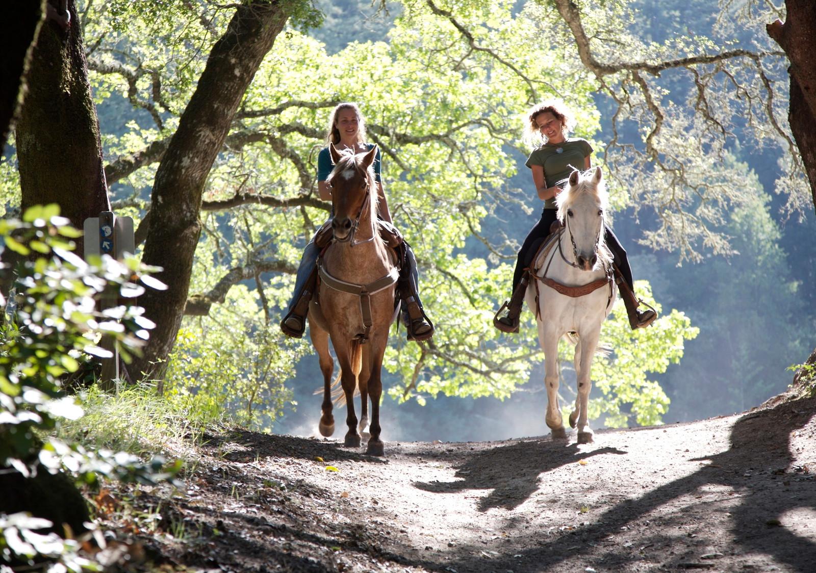 Отдых в Чехии-Конные прогулки