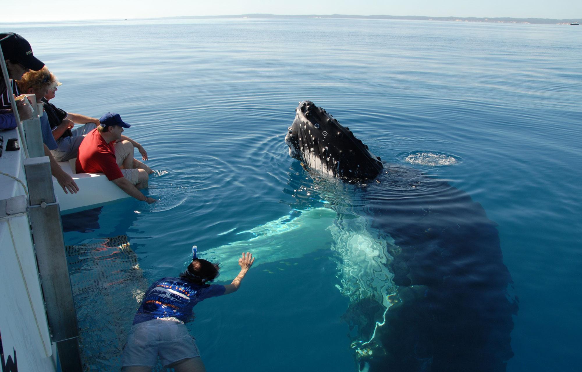 Отдых на Канарских островах - Плавание с китами и дельфинами
