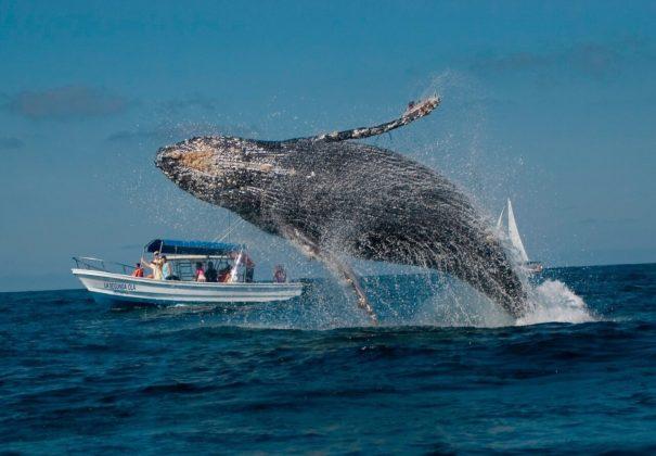 Плавание с китами