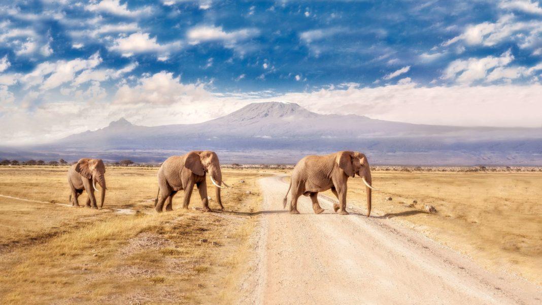 Африка для путешествий