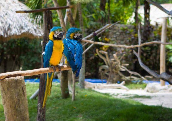 Зоопарк Manati Park